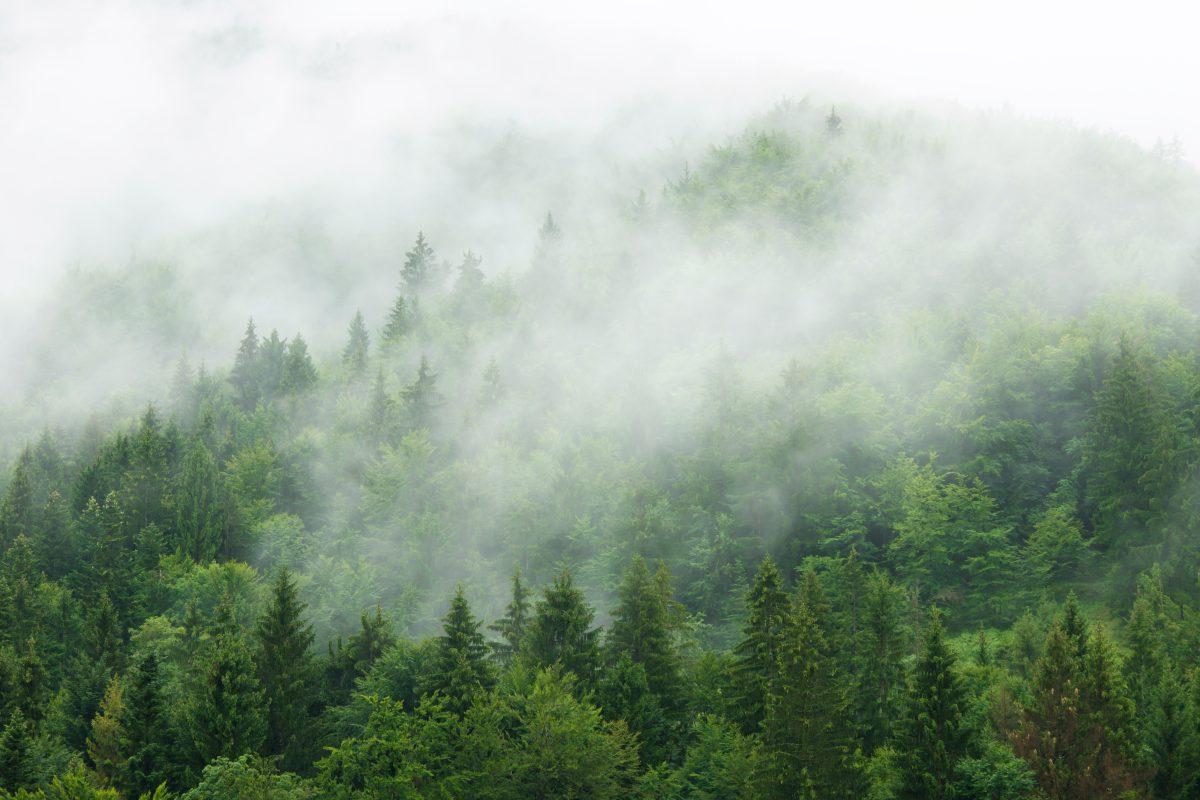 Pădurile din România – exploatare și/sau conservare